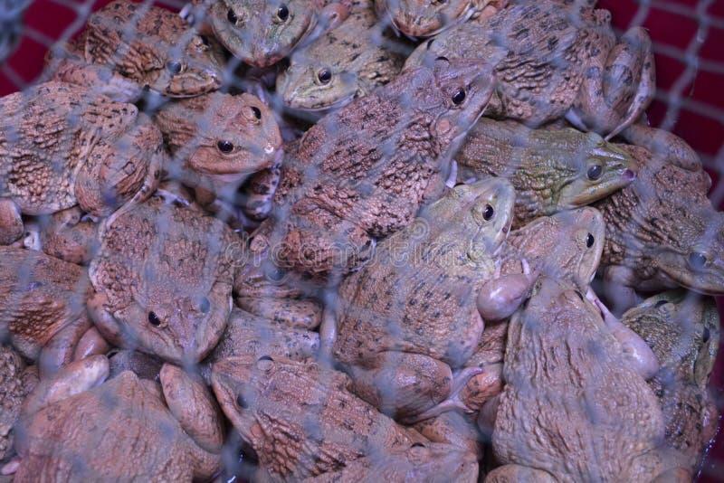 青蛙在市场上 免版税库存照片