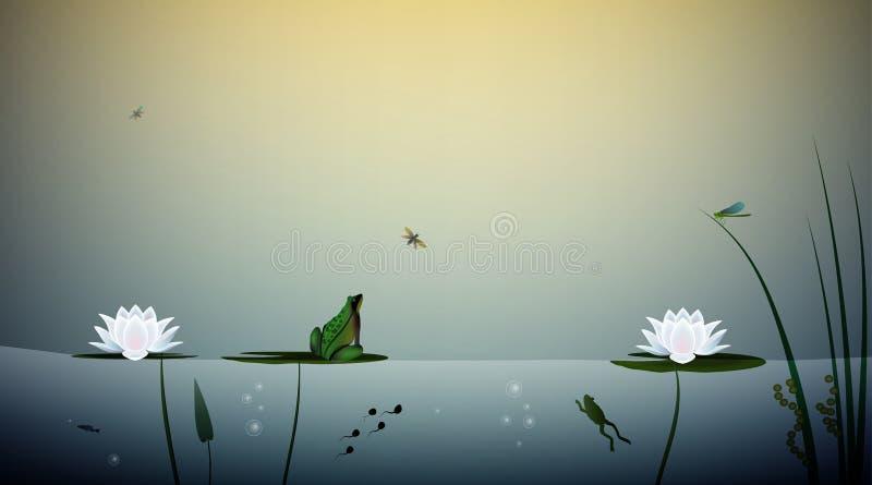 青蛙在池塘,在百合,池塘场面的叶子的青蛙狩猎蝴蝶居住, 皇族释放例证