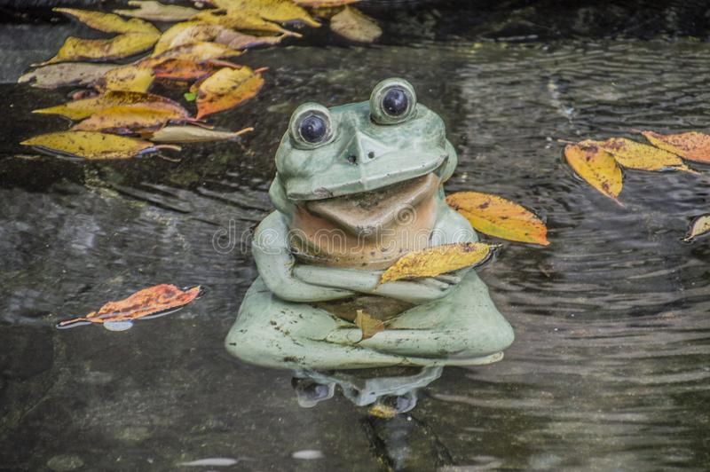 青蛙在Tenryuji禅宗寺庙的一个池塘在Arashiyama京都日本2015年 库存图片