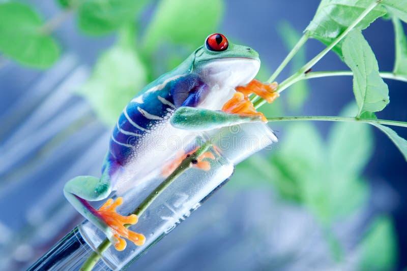 青蛙实验室 免版税库存图片