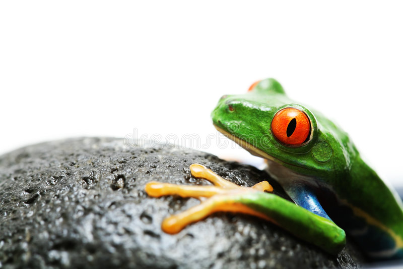 青蛙岩石 免版税库存照片