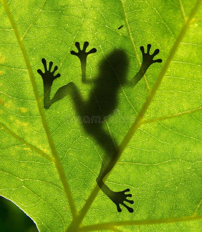 青蛙影子 库存照片
