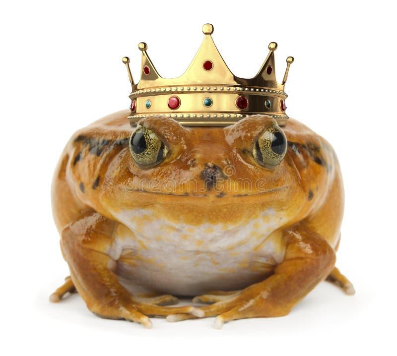 青蛙橙色白色 免版税图库摄影