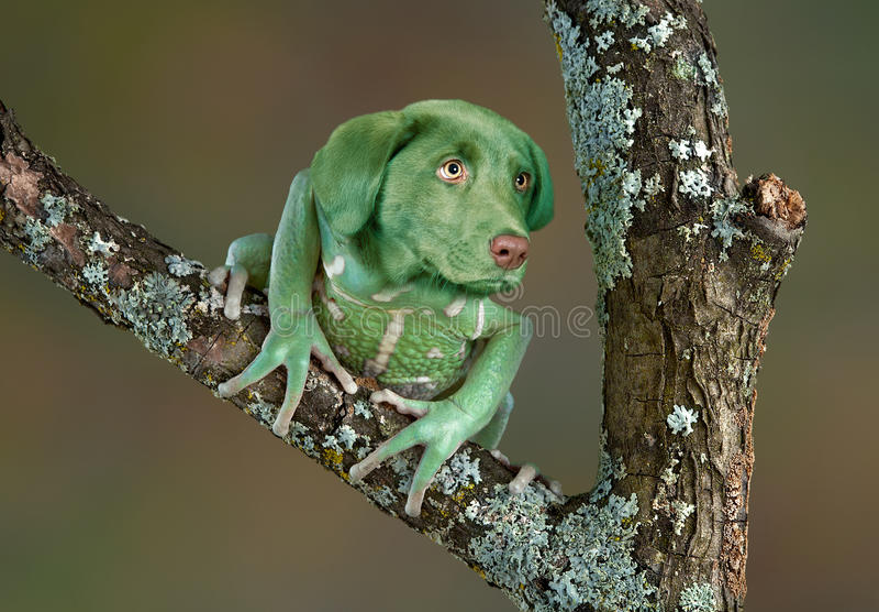 青蛙狗 免版税库存照片