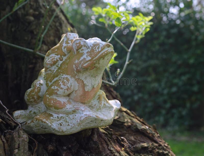 青蛙由黏土制成 库存图片