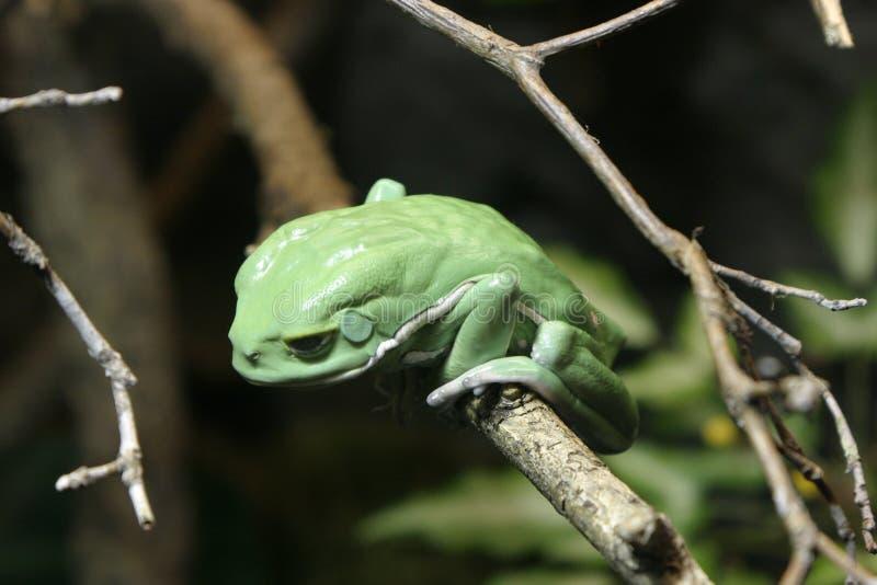Download 青蛙绿色结构树 库存图片. 图片 包括有 青蛙, 绿色, 结构树, 被截肢者, 聚会所, 胡言乱语的, 猴子 - 60377