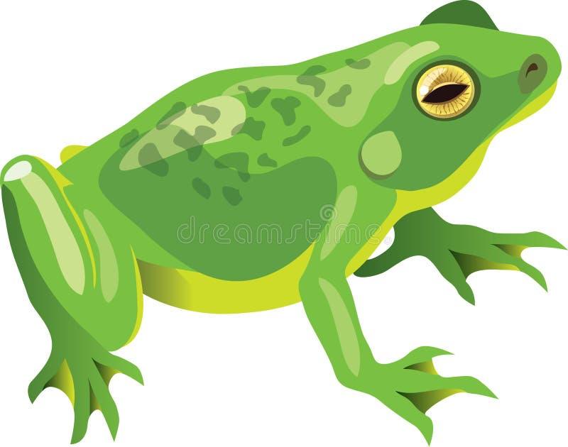 青蛙绿色 库存例证