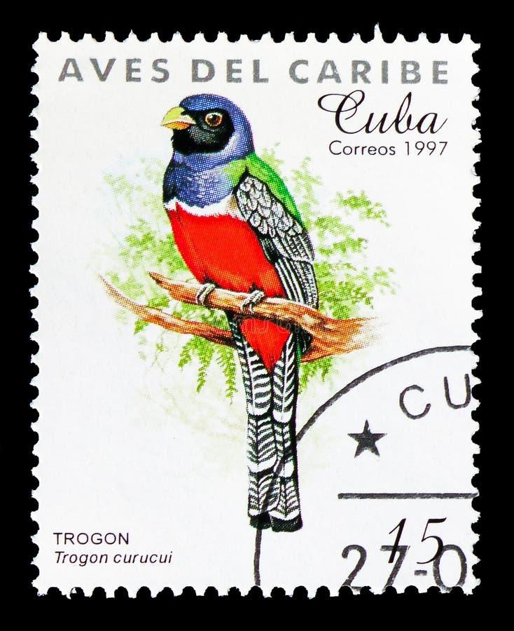 青被加冠的Trogon (Trogon curucui),加勒比鸟serie,大约1997年 图库摄影