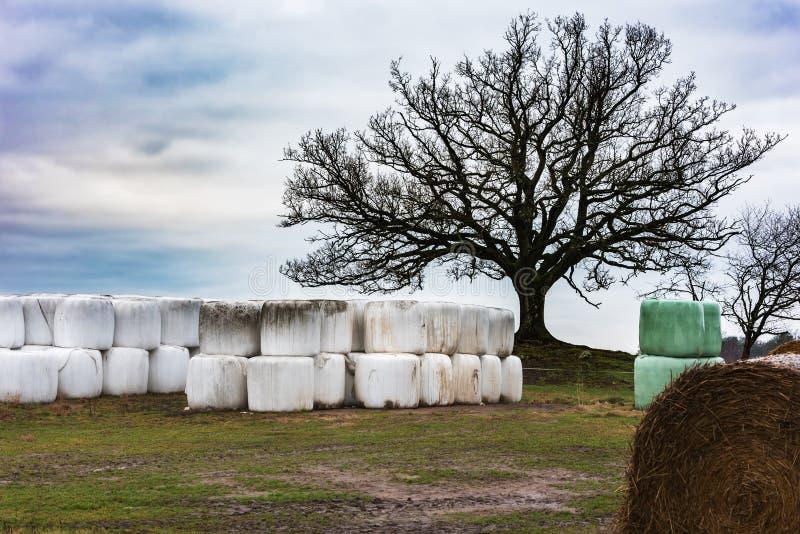 青贮大包在树下 免版税库存照片