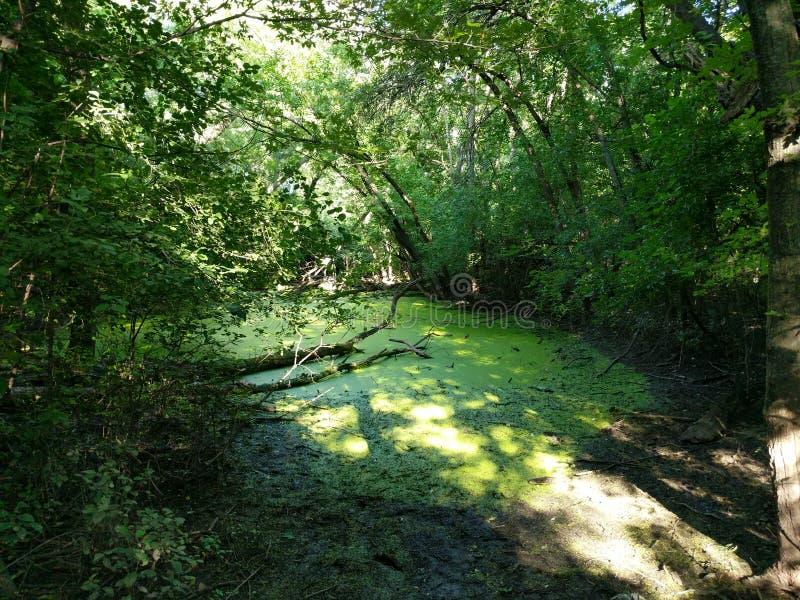 静池在森林 库存照片