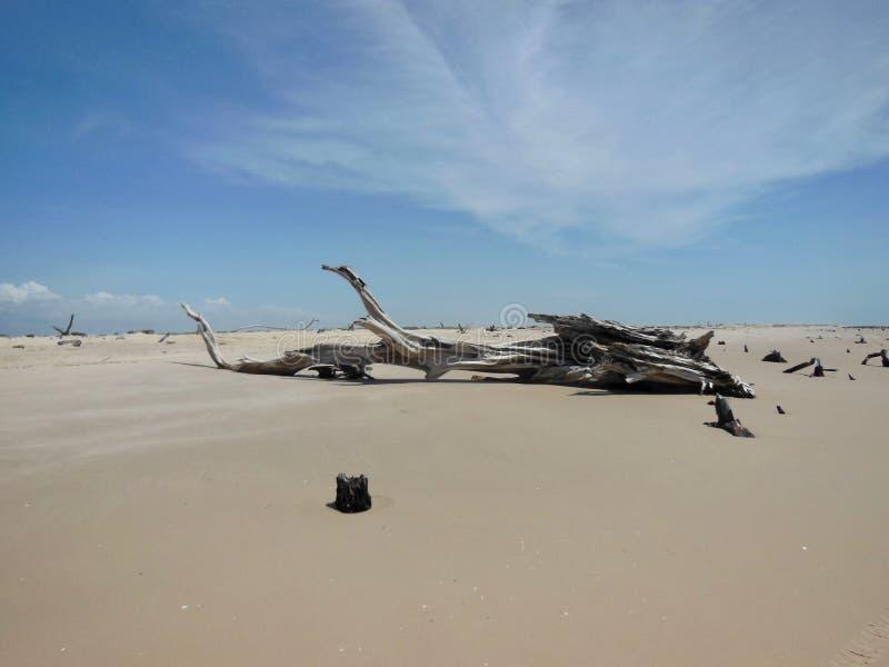 静物画在沙漠 库存图片