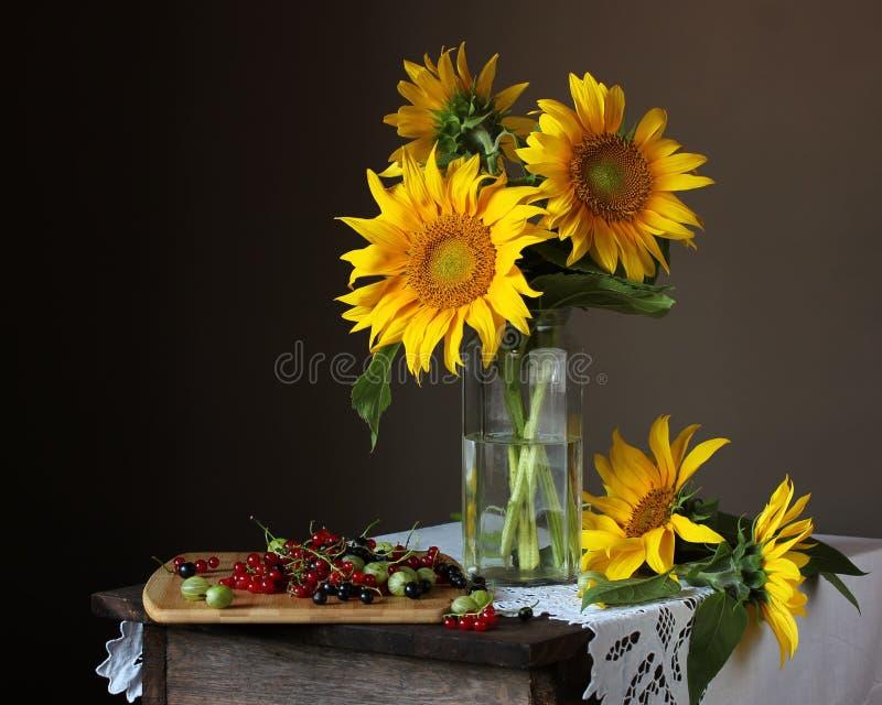 静物画用向日葵和无核小葡萄干 库存照片