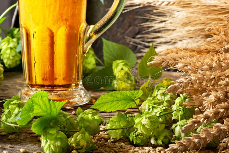 静物画用啤酒和蛇麻草 免版税库存照片