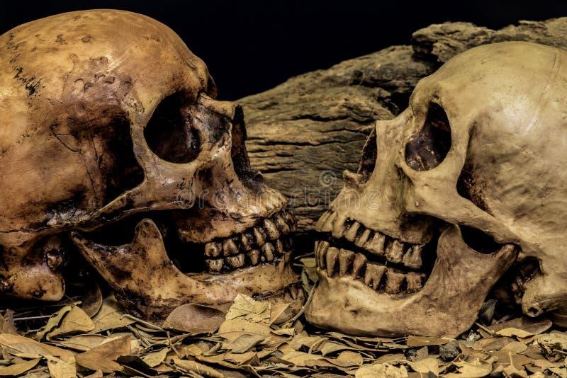静物画夫妇人的头骨艺术摘要背景 免版税库存照片