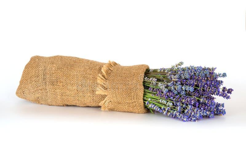 静物画用在白色背景的淡紫色 免版税图库摄影