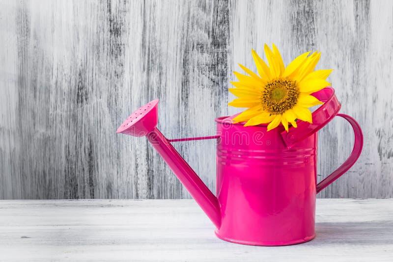 静物画花束向日葵喷壶 免版税库存图片