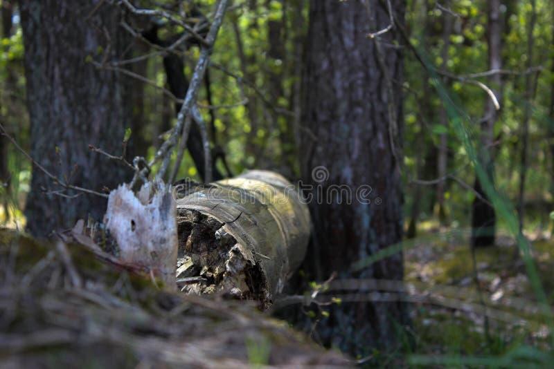 静音的森林 免版税库存图片