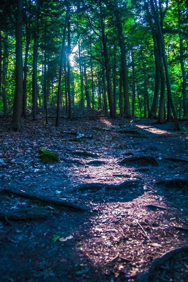 静音的森林 库存图片