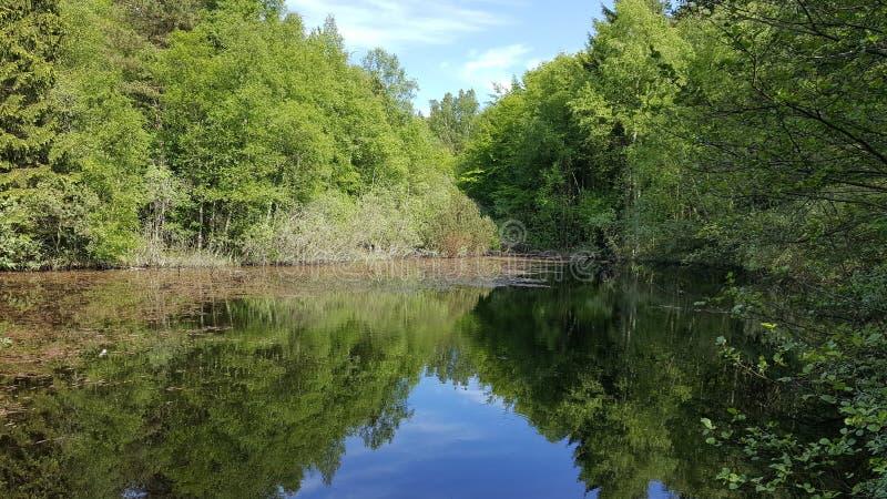 静音的湖 库存照片