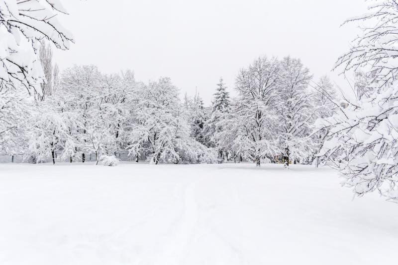 从索非亚,保加利亚的美好的冬天公园风景 图库摄影