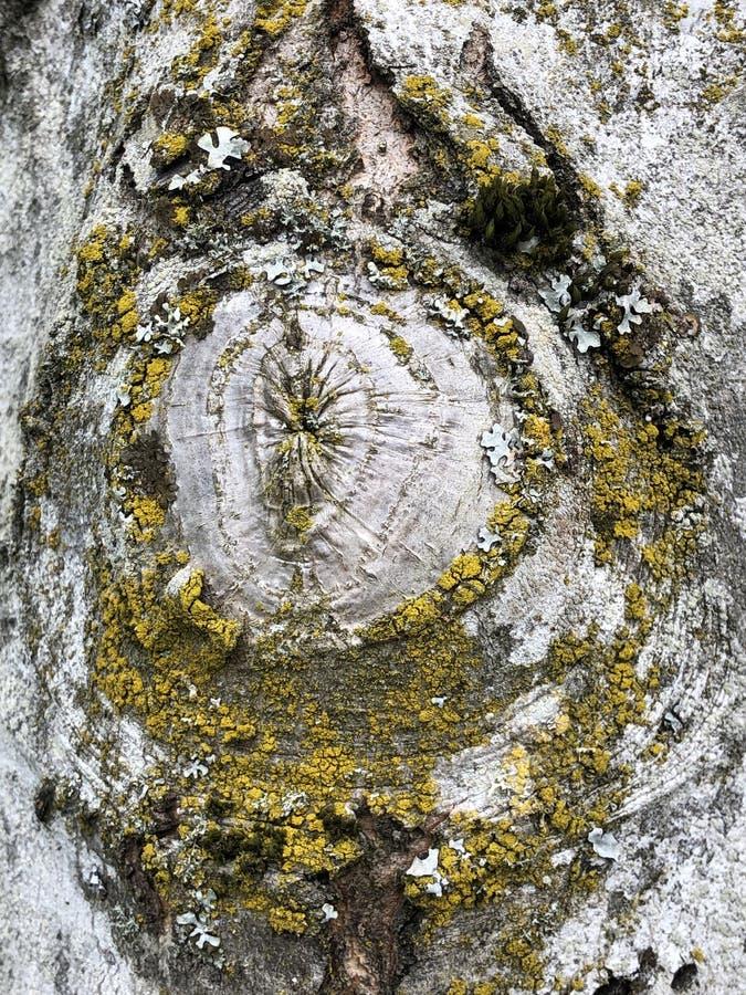非常与绿色和黄色颜色的独特的木头和青苔样式在树干 免版税库存图片