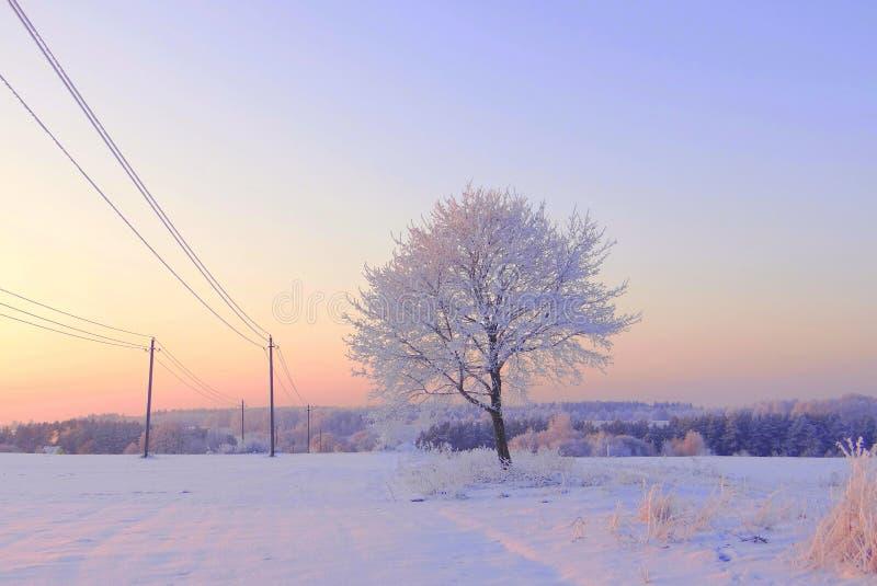 非常冷的冬天早晨在立陶宛, - 24度冷 2016-01-08 图库摄影