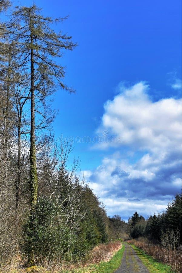 非常好春日在森林里 库存照片