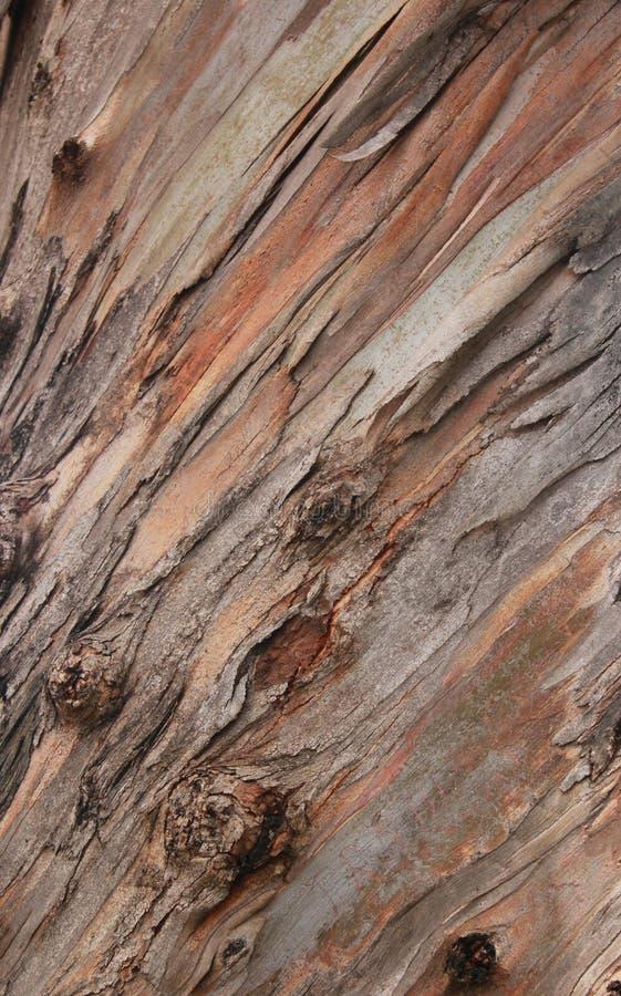 非常好的树词根纹理自然本底 库存图片