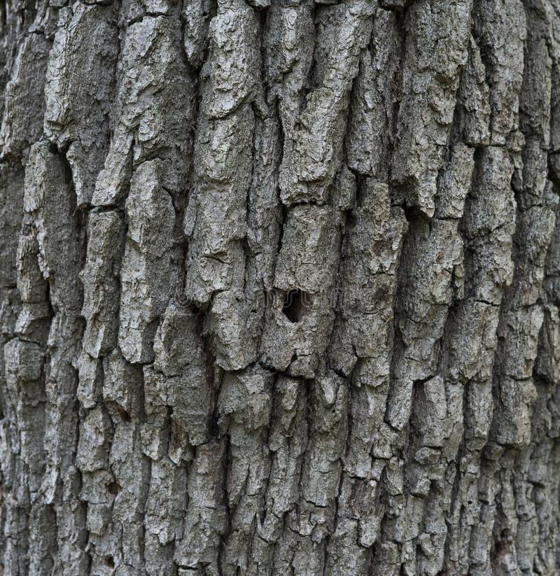 非常旧的树皮纹理背景 免版税图库摄影