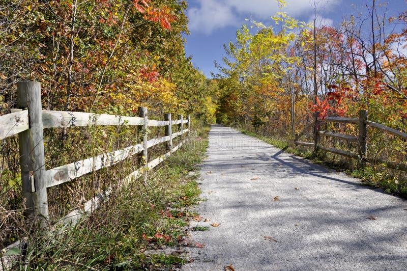 非常秋天山毛榉多云蕨照明设备天空软的线索 库存图片