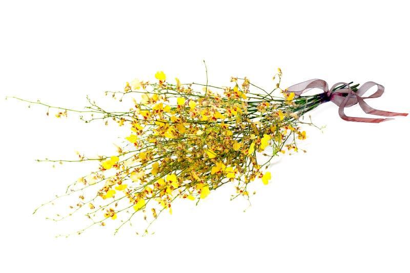 罕见的种类在白色背景的微型兰花 免版税库存图片