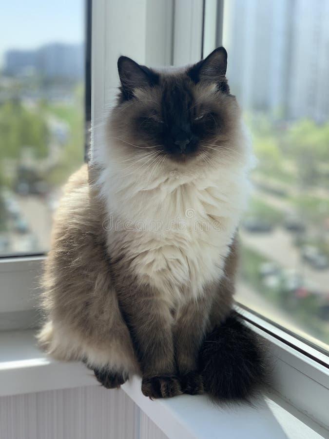 非常美丽和摆在猫 库存照片