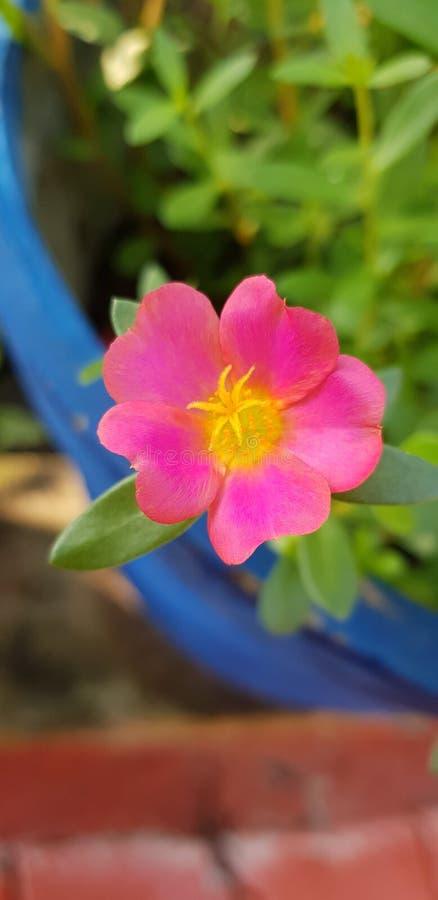 非常美丽的花 库存图片
