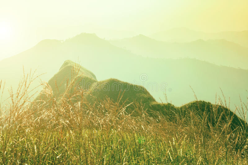 非常美丽黎明山 在小山的草地与阳光 新鲜的natu 免版税库存图片