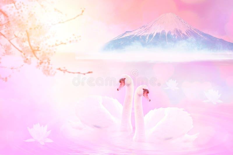非常美好的白色夫妇天鹅感觉浪漫和爱在有Mt的山中湖 富士背景,著名和平安,桃红色 库存图片