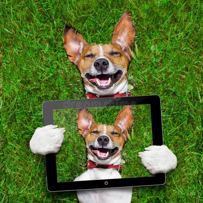 非常滑稽的狗 库存照片