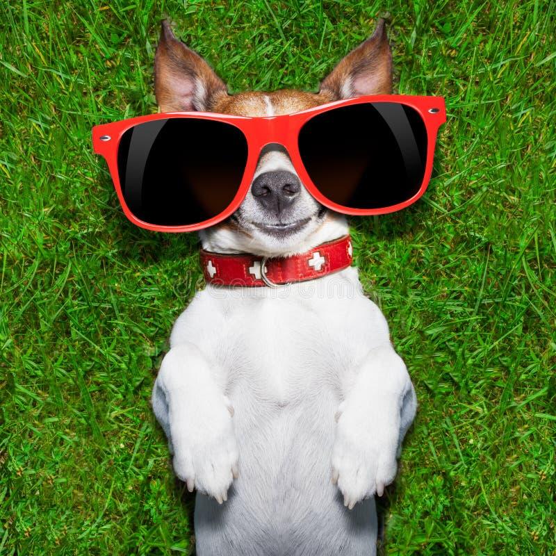 非常滑稽的狗 免版税库存照片