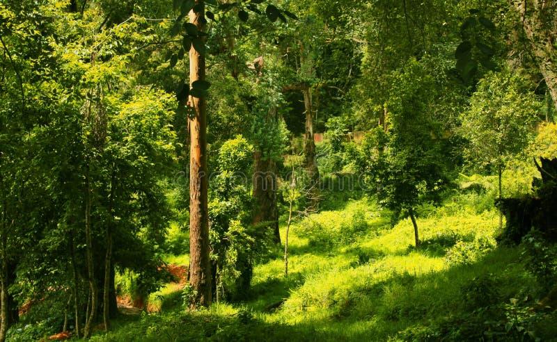 非常kodaikanal布耐恩特公园的好的美好的风景 库存照片