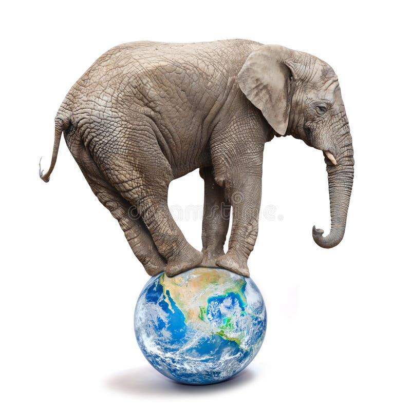 非洲大象-平衡在蓝色行星或地球的非洲象属africana 图库摄影