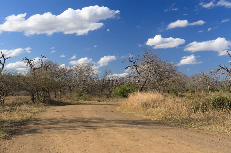 非洲横向 免版税库存图片