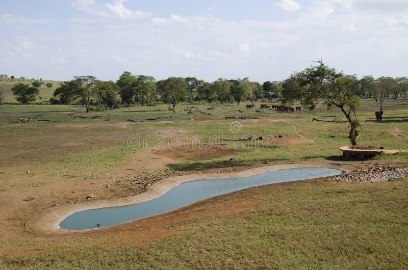 非洲水 免版税库存照片