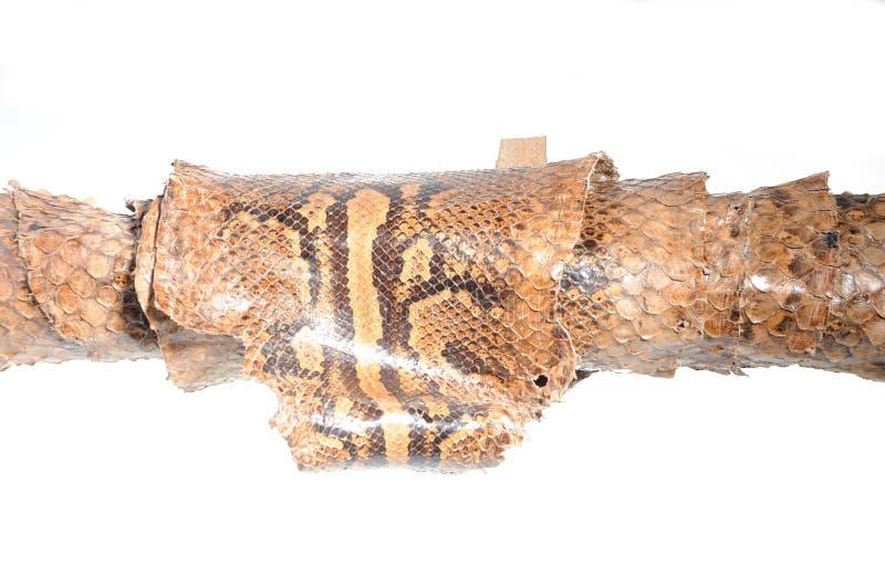 非洲皮革Python岩石 免版税库存照片