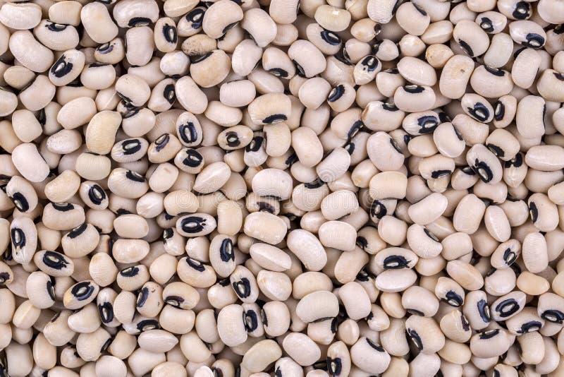 非洲芳香黑色分析乳脂状的特别眼睛好被注视的类似的背景豆原来地有豌豆小的纹理类型 豇豆豆 免版税库存图片