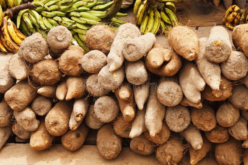 非洲薯类 免版税库存图片