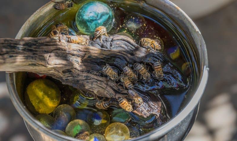 非洲蜂蜜蜂在做蜂浴的家 库存图片