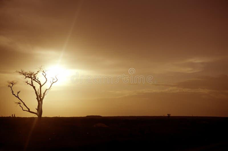 非洲褐色上色金黄天空日落温暖 免版税库存照片