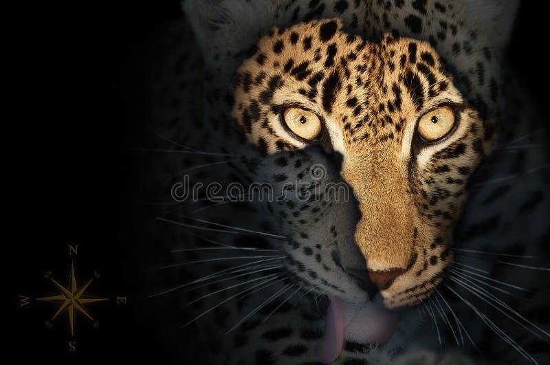 非洲豹子映射 皇族释放例证