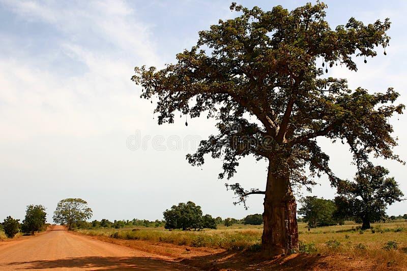 非洲路 免版税库存图片