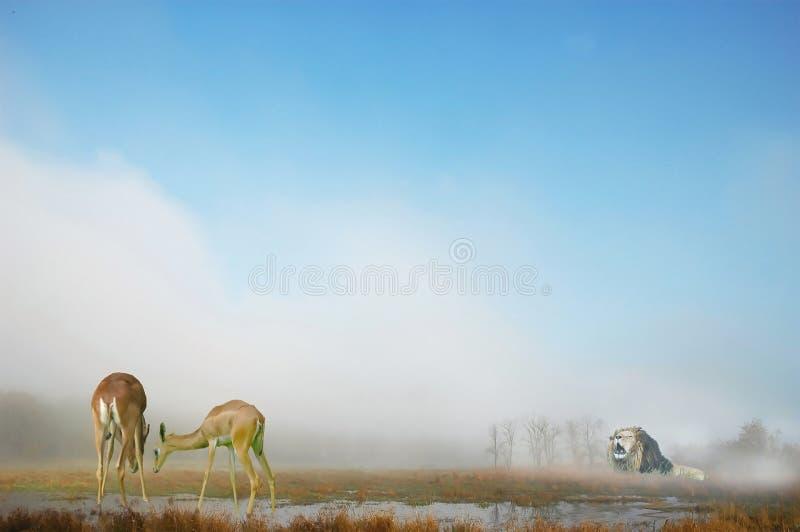 非洲野生生物 免版税库存照片