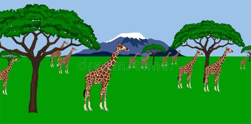 非洲长颈鹿牧群风景 向量例证